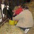 19 adrienne et elise donne du lait aux veaux