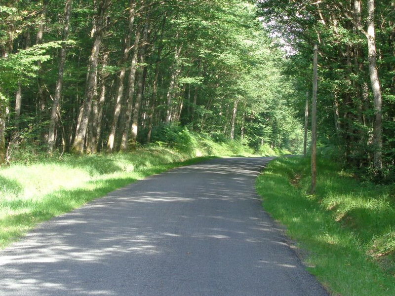 route forêt