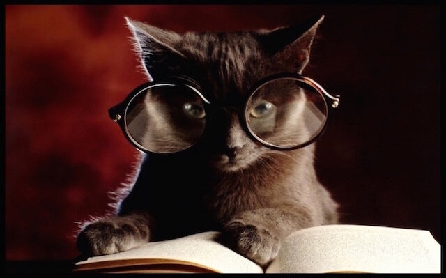 chat lecture lunettes
