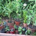 Je regarde les autres jardiner !
