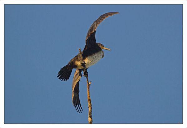 ville lulu cormoran perche ailes soleil 311012