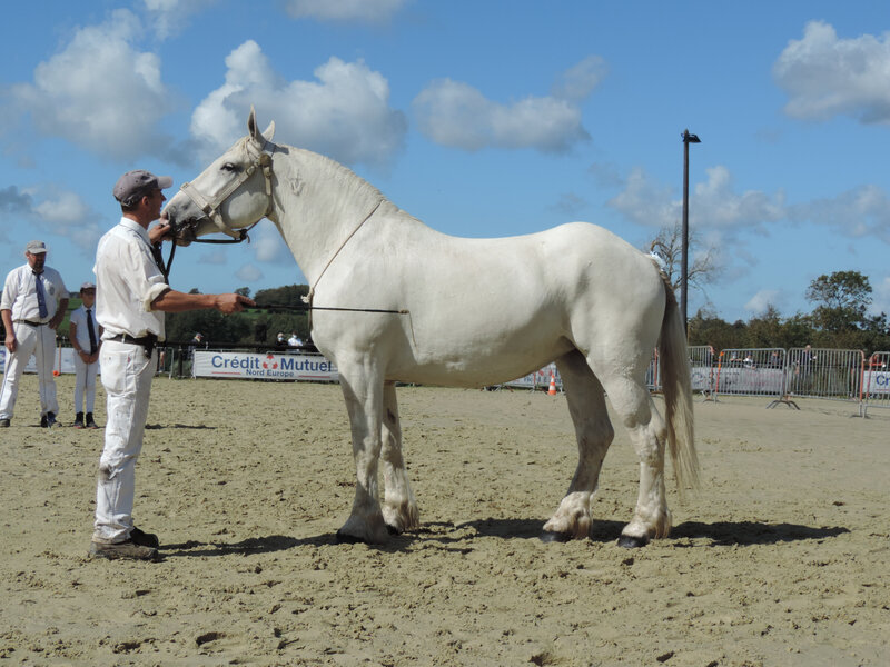 Hirondelle du Boncoin - 5 Septembre 2020 - National Boulonnais - Samer (62) - 2e (3 ans - Grande Taille (1m68 et plus))