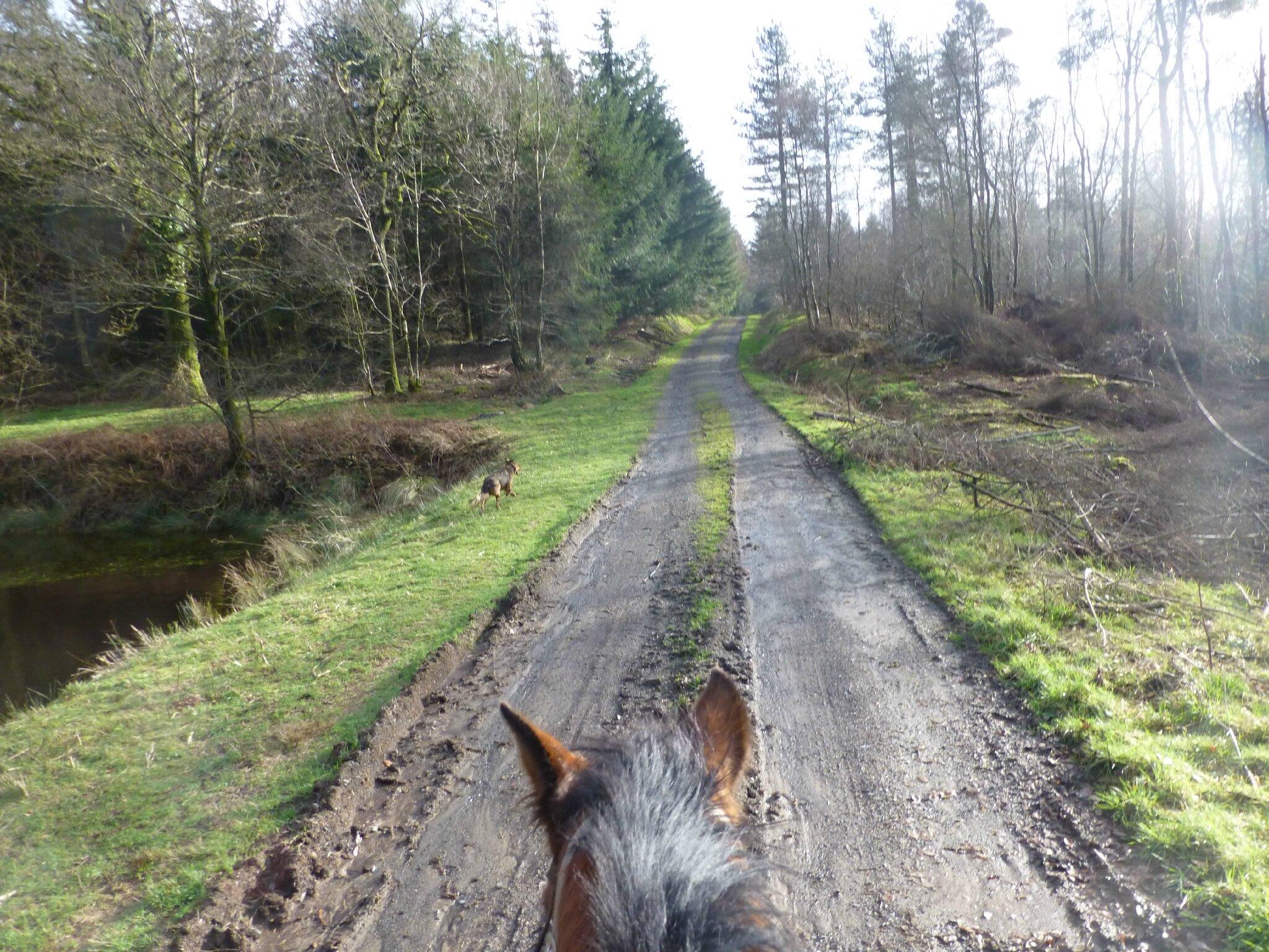 Balade à cheval dans la forêt P1080249