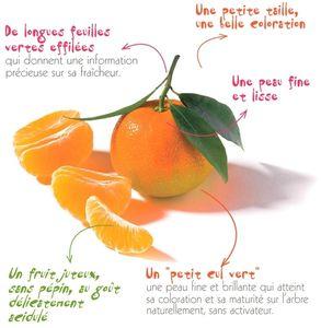 La_Clementine_Corse_en_detail