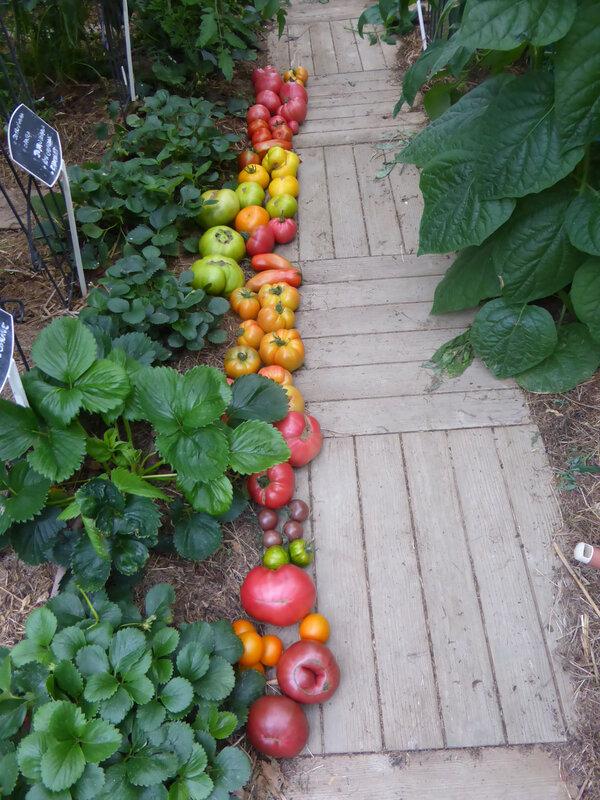 17-tomates (4)