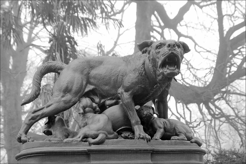 Toulouse statue chienne brume 221213