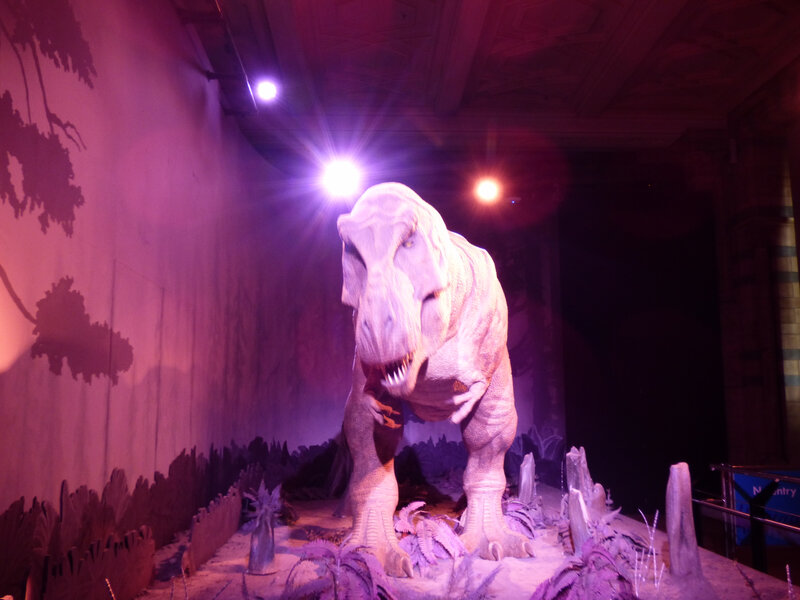 25 Londres Natural History Museum (43)