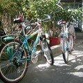 Voila nos beaux vélos !