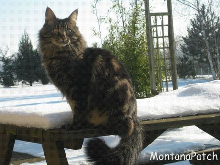 Hiver MontanaPatch
