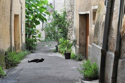 DSC_0525_ChatNoir_D1280