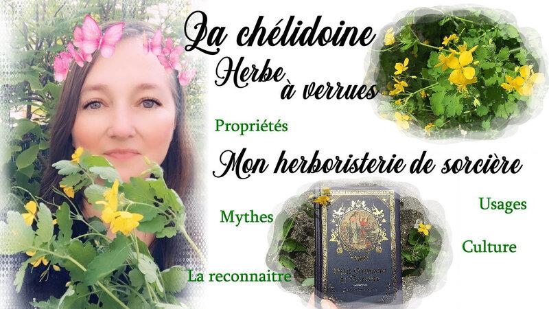 chelidoine herbe verrues sorcière plante