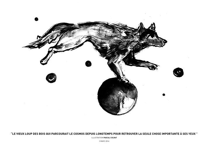 le vieux loup des bois