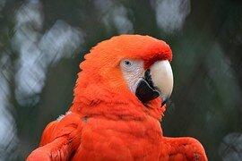 perroquet 7