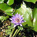 Des Caudrotais à TAHITI Septembre 2014-2 (4)