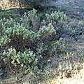 Végétation méditerranéenne Buissons garrigue Jouques en Provence