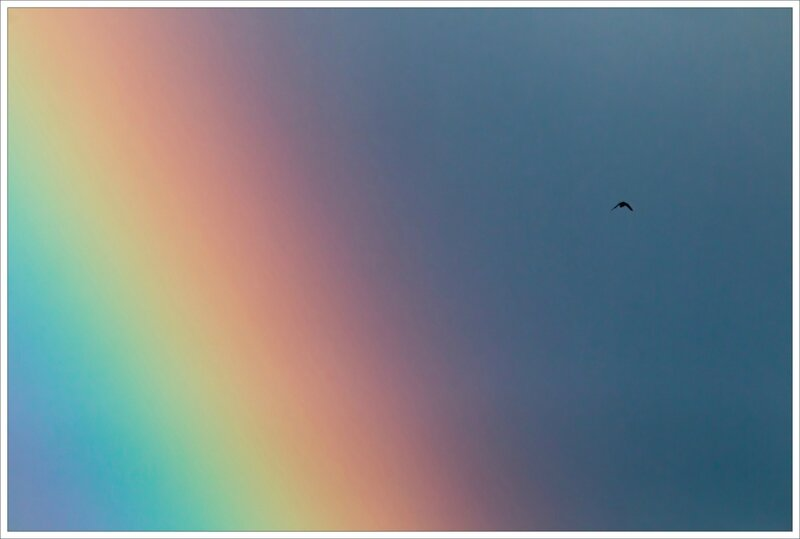 ville oiseau arc en ciel 180216 3