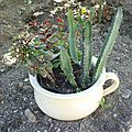 dét obj plantes (5)