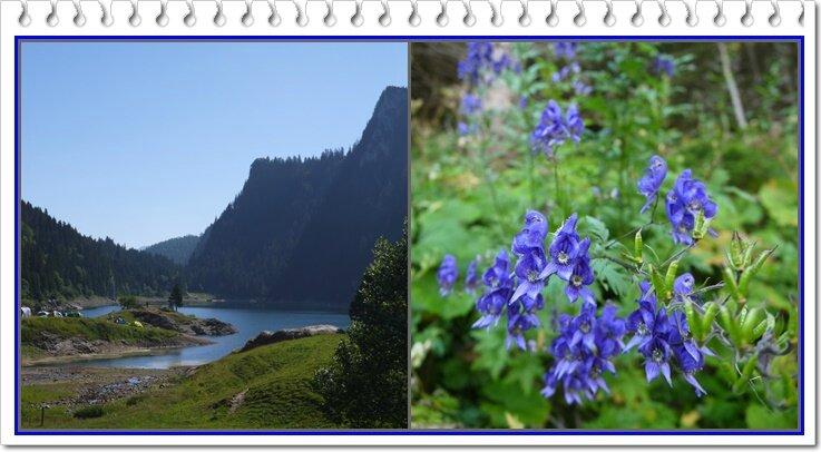 02 Lac et Ancolie