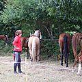 équitation d'extérieur - parcours en terrain varié (24)