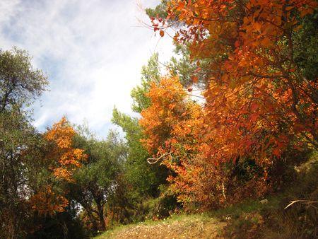 automne_2010_vinaigrier_021a