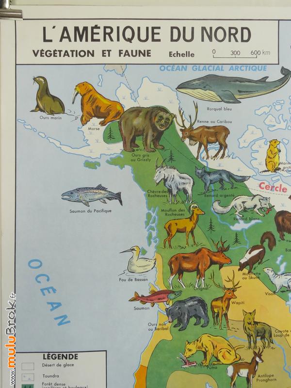CARTE-Amérique-Nord-végétation-faune-1-muluBrok-Vintage