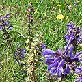 Les fleurs de l'été (7)...