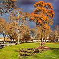 Fin des couleurs de l'automne sur dax