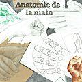 Etude anatomique de la main