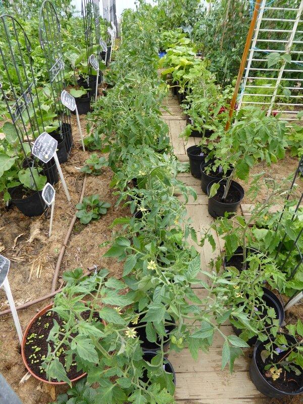 13-tomates en voyage (2)