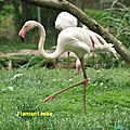 Au zoo parc de trégomeur dans les côtes-d'armor