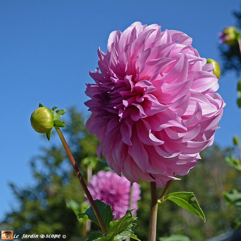 N49-Prix-des-fleuristes
