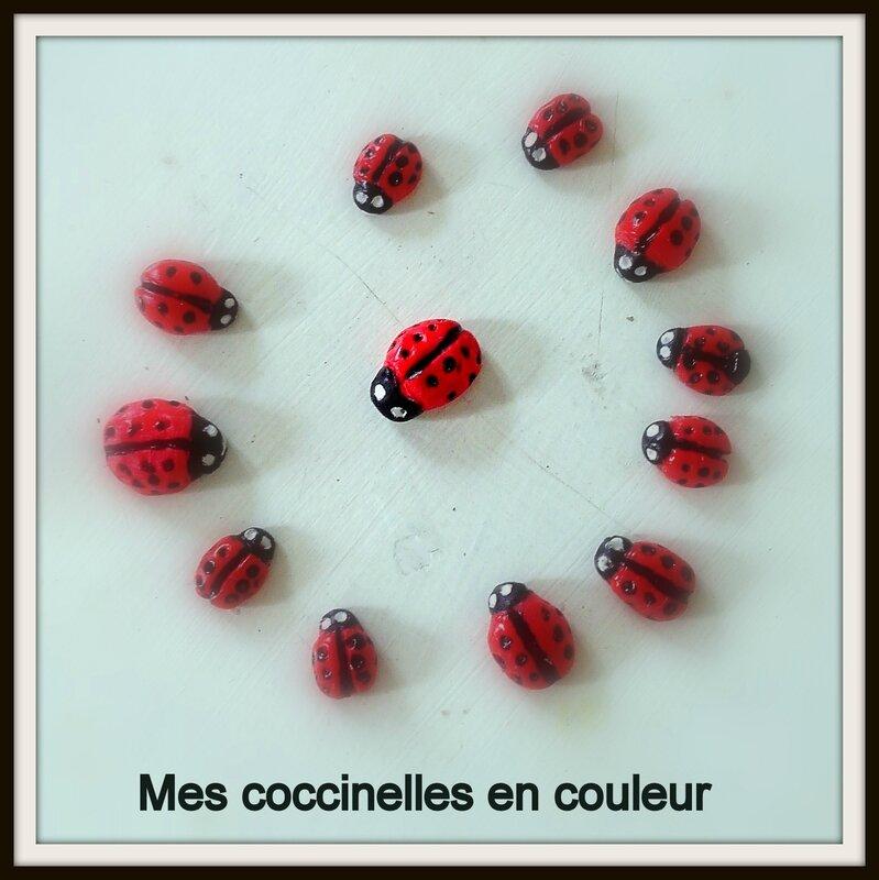coccinelles en couleur