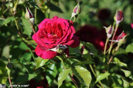 Red-Parfum