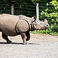 rhinoceros beauval