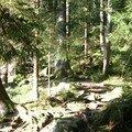 westweg... Glaswaldsee. forêt de lumière