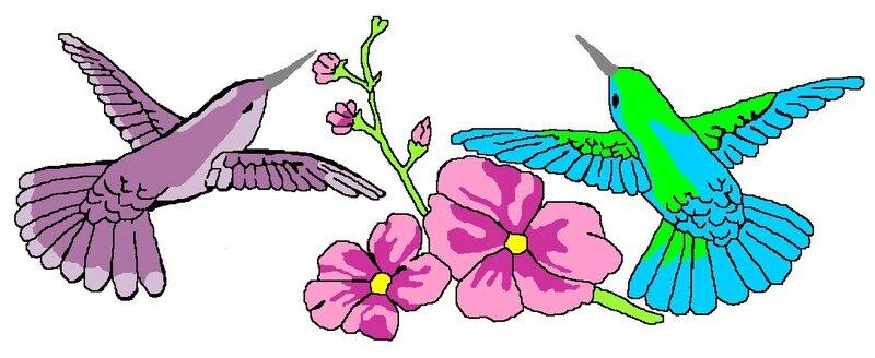 colibris dessin