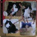 La famille chats de Vero 2A