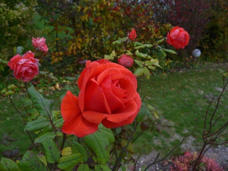 10 - Rosier - Orange
