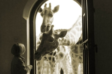 giraffe_manor4_938x620