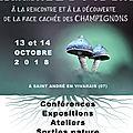 Le forum mycélium : le secret des champignons.