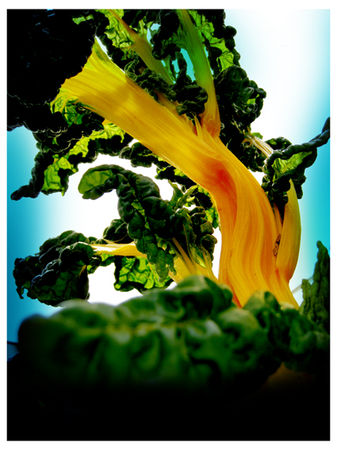 plante_jaune