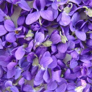Violettes_029