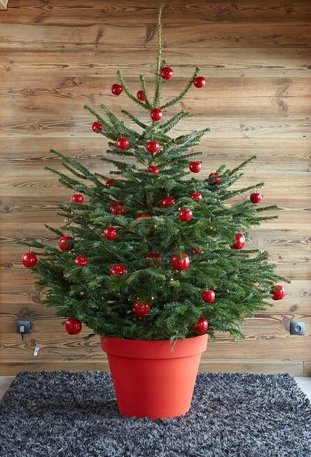 01BF000007803975-photo-sapin-en-pot-boules-rouges