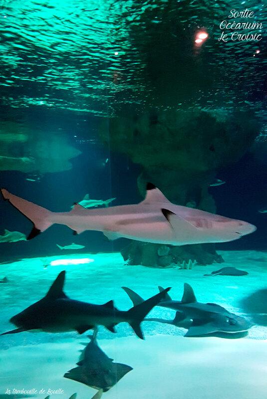 Requin-ocearium-lecroisic-44-loireatlantique