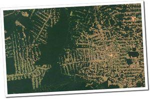 amazonie deforestation
