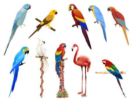 paerroquets