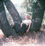 1953-09-02-LA-Laurel_Canyon-Tree_Sitting-040-1
