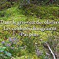 Dans le gris-vert des oliviers