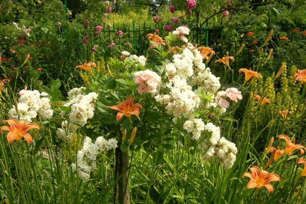 Monet jardin juillet 2013 61