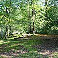 Plateau de hêtres et de mousse près des sources du Lourdios...